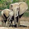 7 Days Rwanda Gorilla Safari Safari