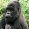 5 Days Rwanda Gorilla & Nyiragongo Hike