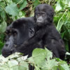 9 Days Gorilla Safari adventure
