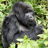 3 Days Uganda Gorilla Holidays