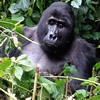 2 Day Gorilla Trek Congo