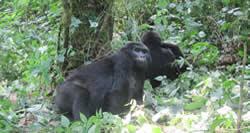3 Days Gorilla Trek Rwanda