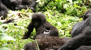 Gorilla Trekkng Rwanda
