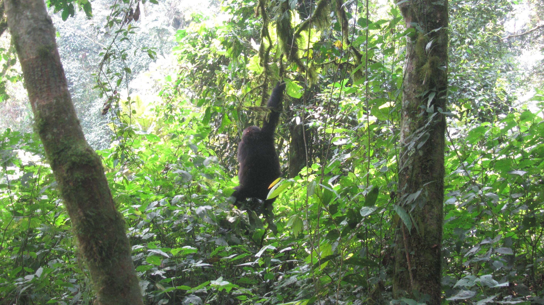 3 Days Rwanda mountain Gorilas
