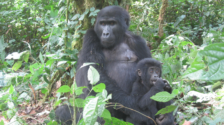 Visit Rwanda Safaris