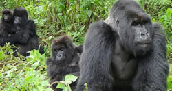 9 Days Gorilla Safari africa