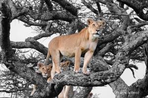 Wildlife Safaris in Queen Elizabeth