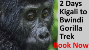 Gorilla Trekking Adventures in Uganda